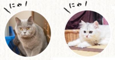 2019.10月の猫スタッフ